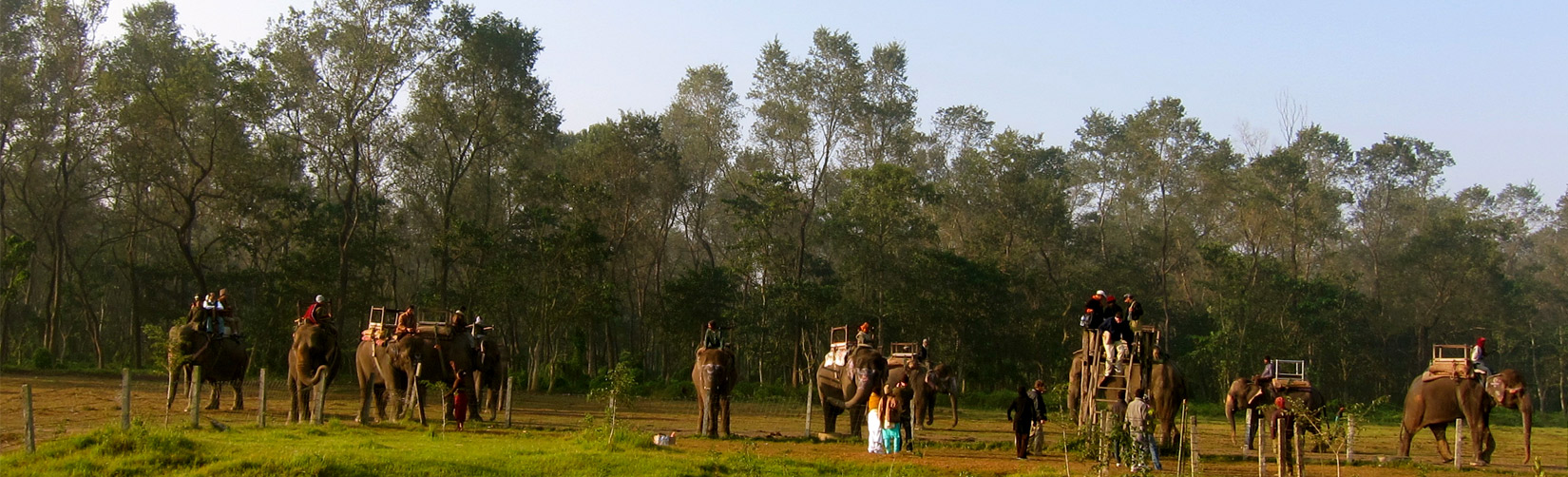 Jungle Safari at Sauraha in Chitwan